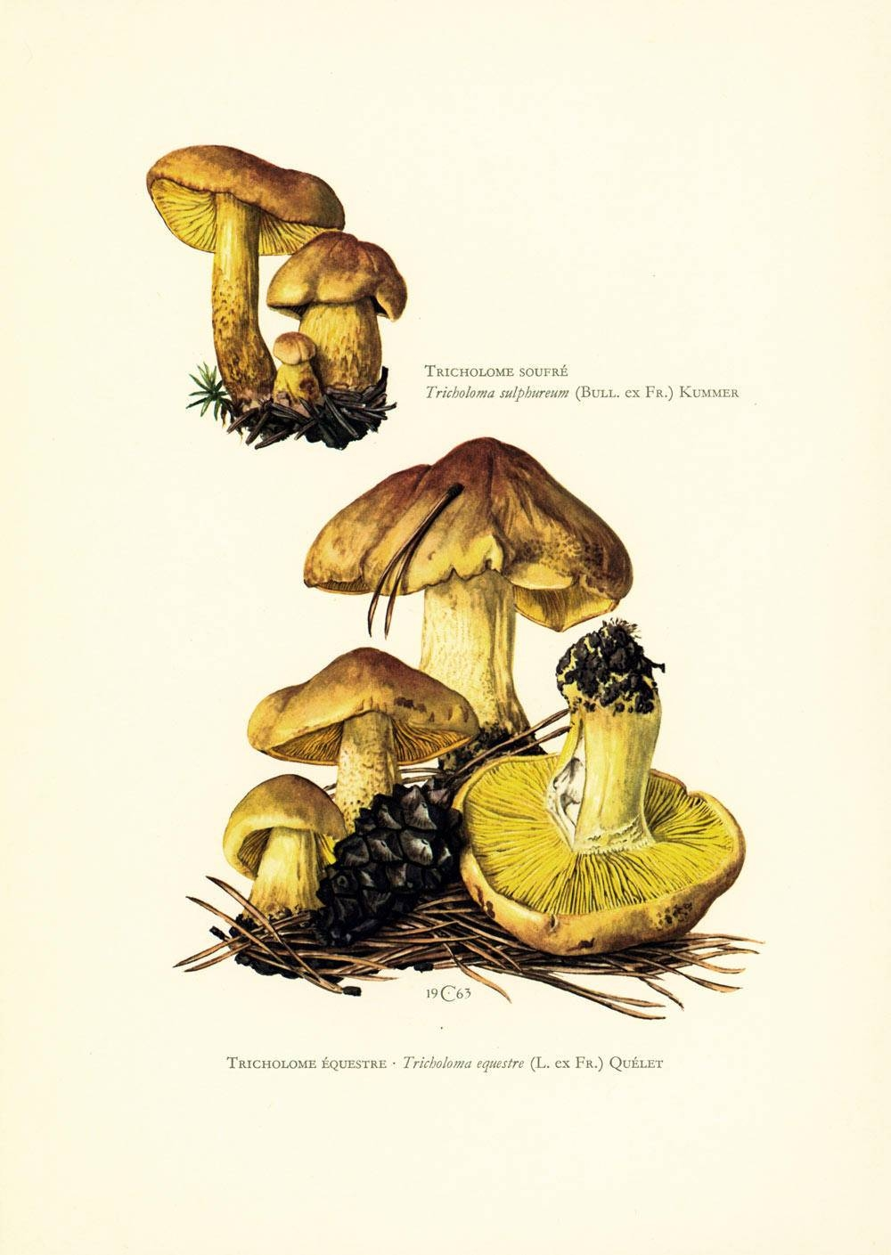 1962 Vintage Print Mushrooms Wall Art Home Decor Mycology Pertaining To Best And Newest Mushroom Wall Art (View 15 of 20)