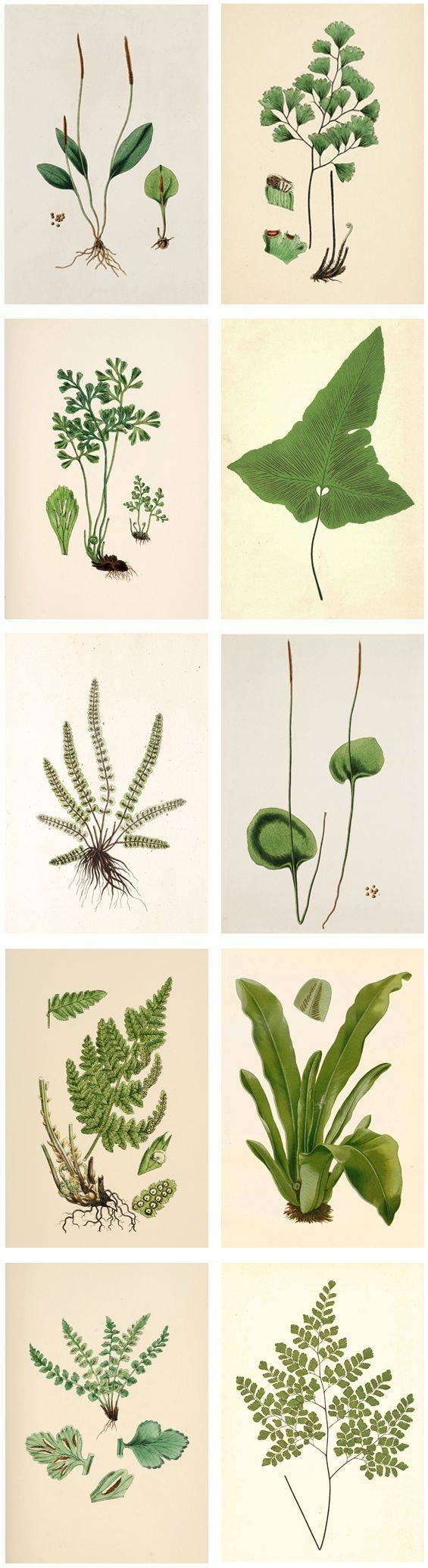 25+ Unique Plant Art Ideas On Pinterest | Mirror Art, Printable Pertaining To Recent Floral & Plant Wall Art (View 4 of 25)