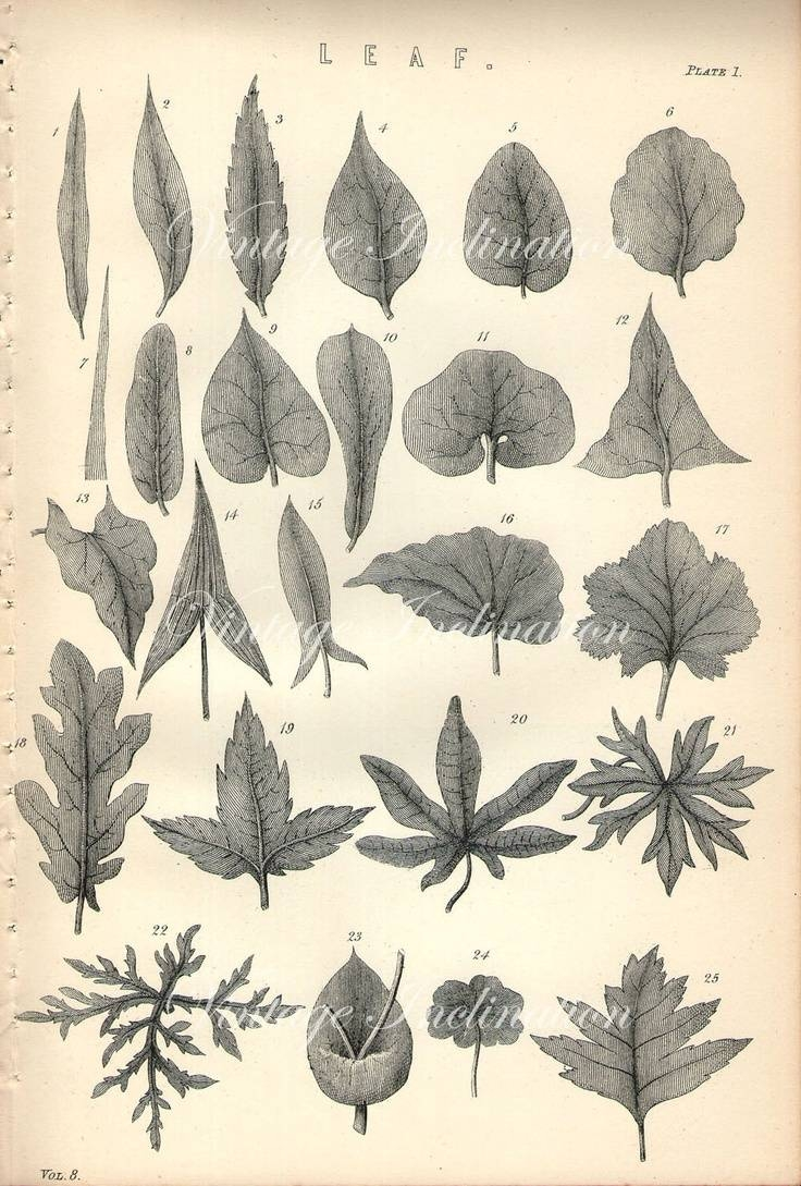 98 Best Botanical Prints (View 8 of 20)