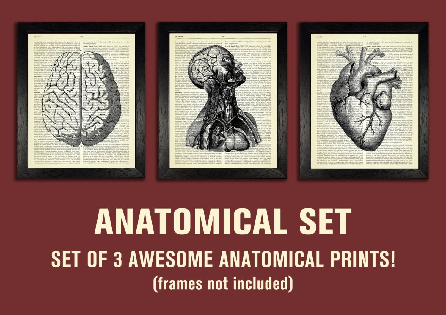 Anatomical Set Anatomy Print Set Medical Wall Art Intended For 2018 Medical Wall Art (View 4 of 20)