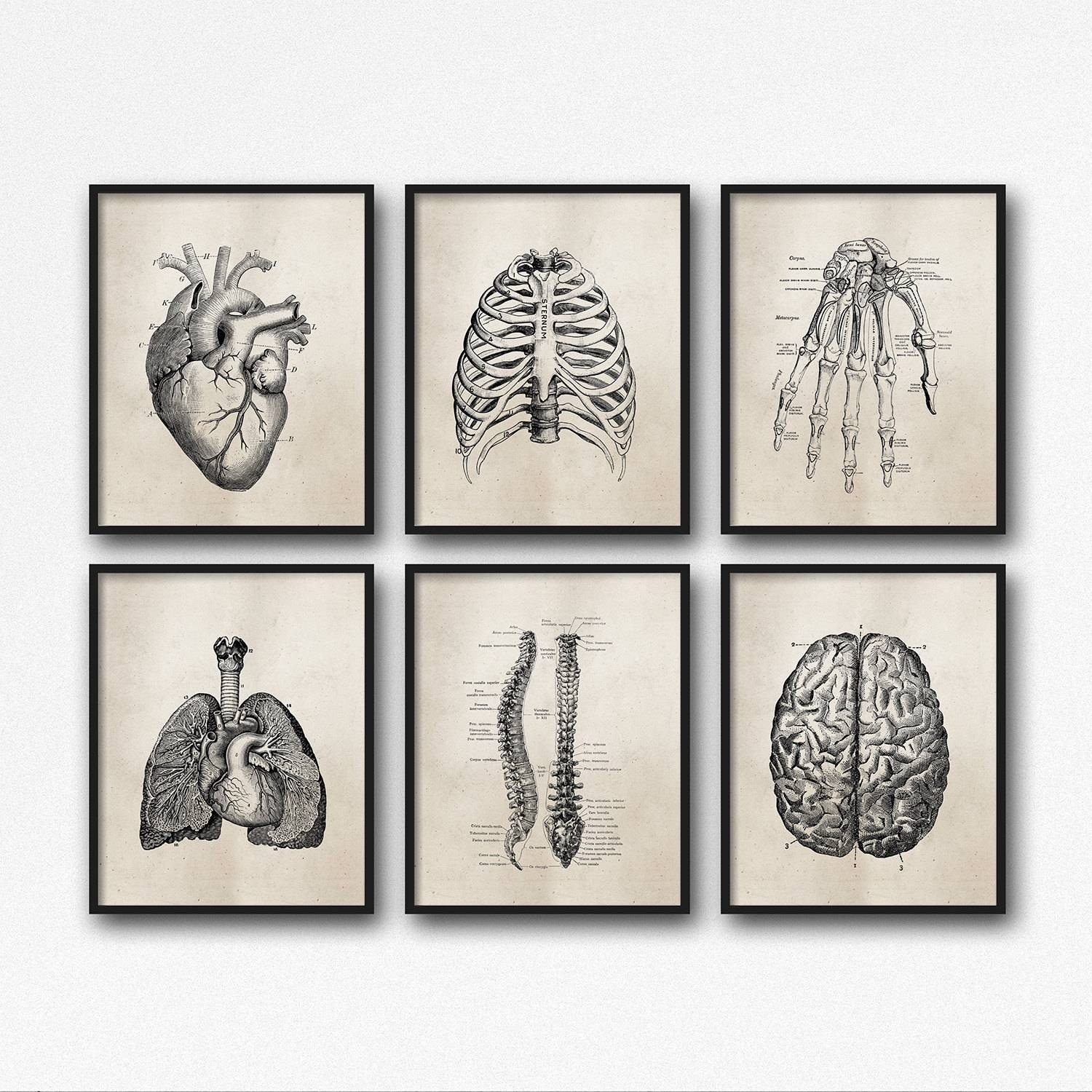 Anatomy Art Prints Office Art Medical Student Graduation For Recent Medical Wall Art (View 3 of 20)