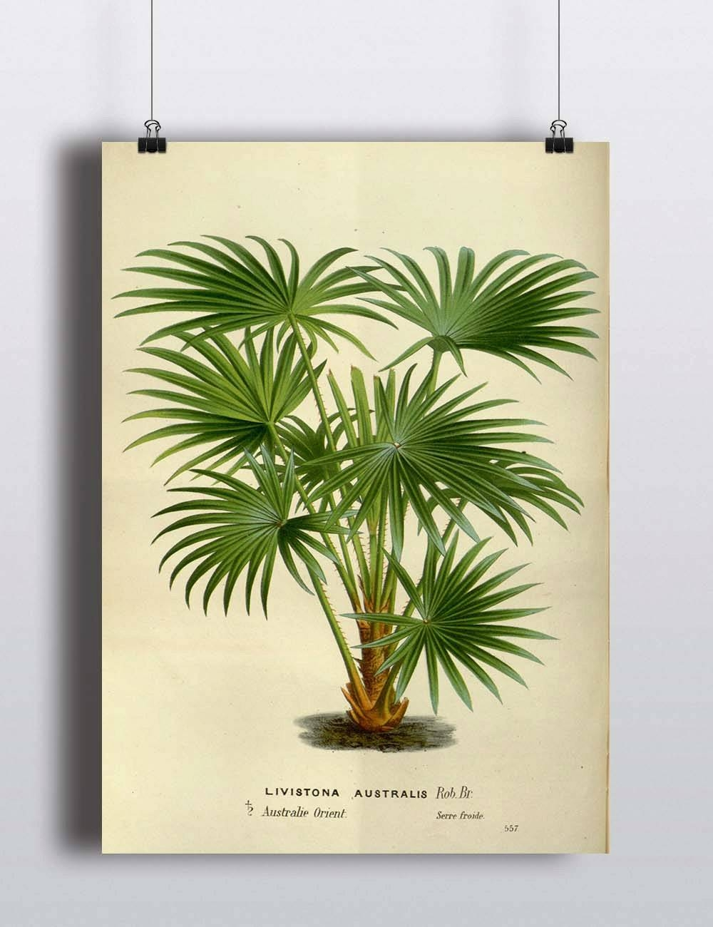 Antique Palm Tree Print Botanical Print Illustration Art Print In Current Botanical Prints Etsy (View 9 of 20)