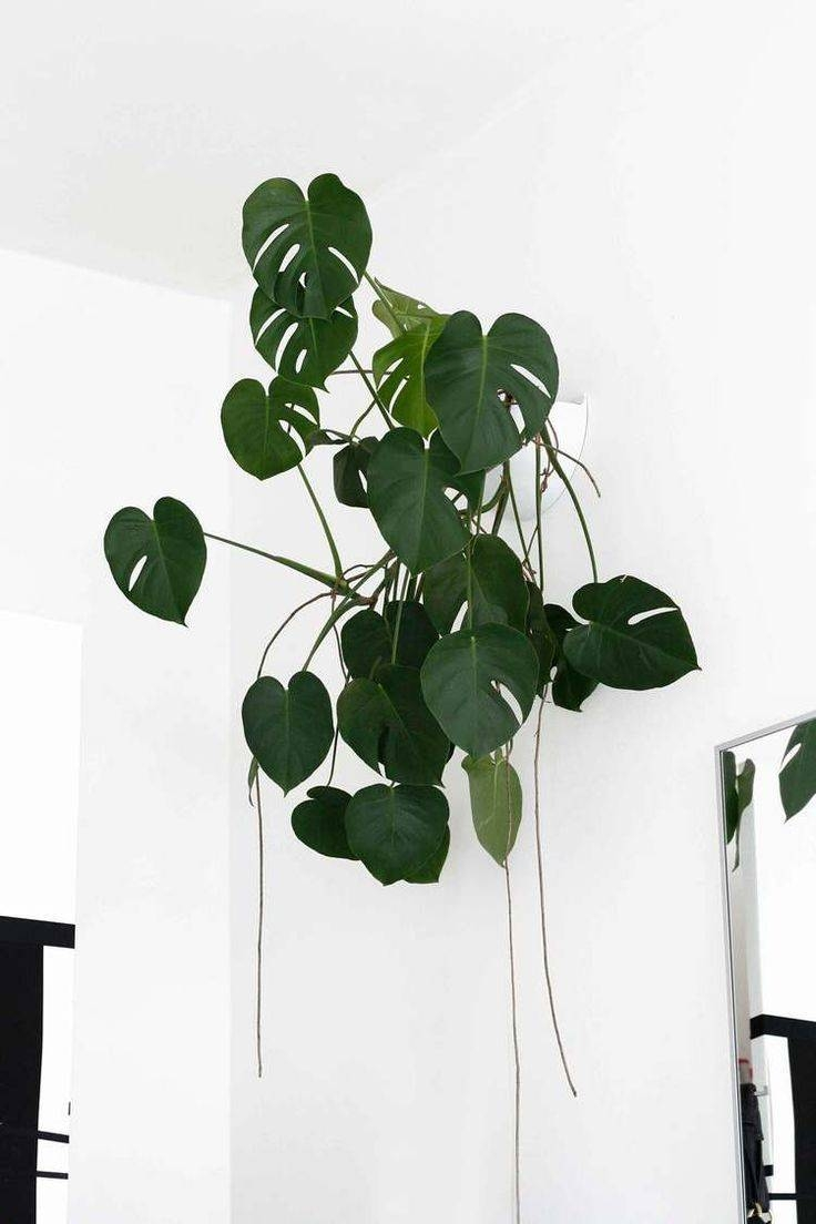Best 25+ Plant Wall Ideas On Pinterest   Living Room Wall Art In Most Popular Floral & Plant Wall Art (View 17 of 25)