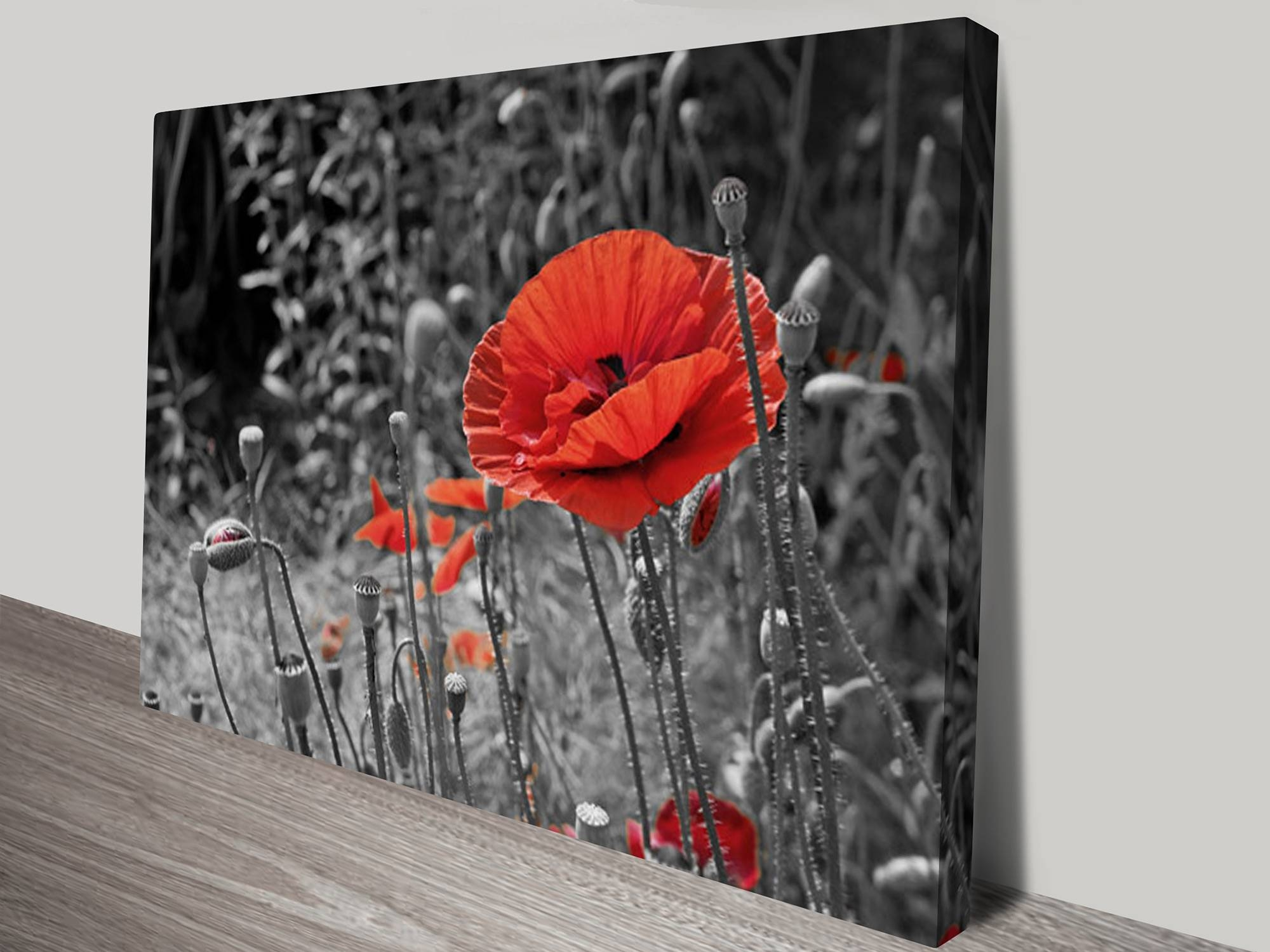 Colour Splash Canvas Prints Australia For Newest Black And White Wall Art With Red (View 5 of 25)