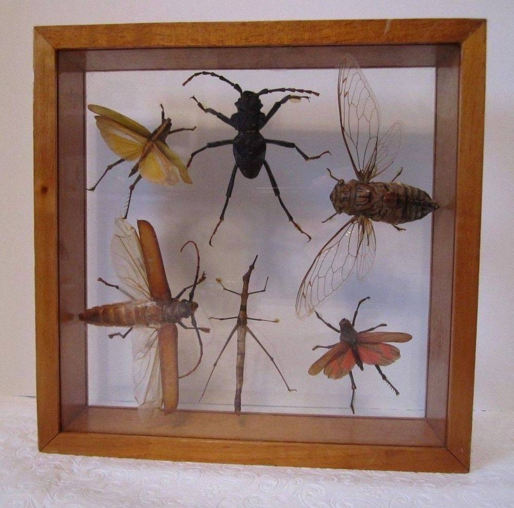 Cool Shadow Box Wall Art Australia Real Insect Shadow Box Seashell With Current Insect Wall Art (View 5 of 30)