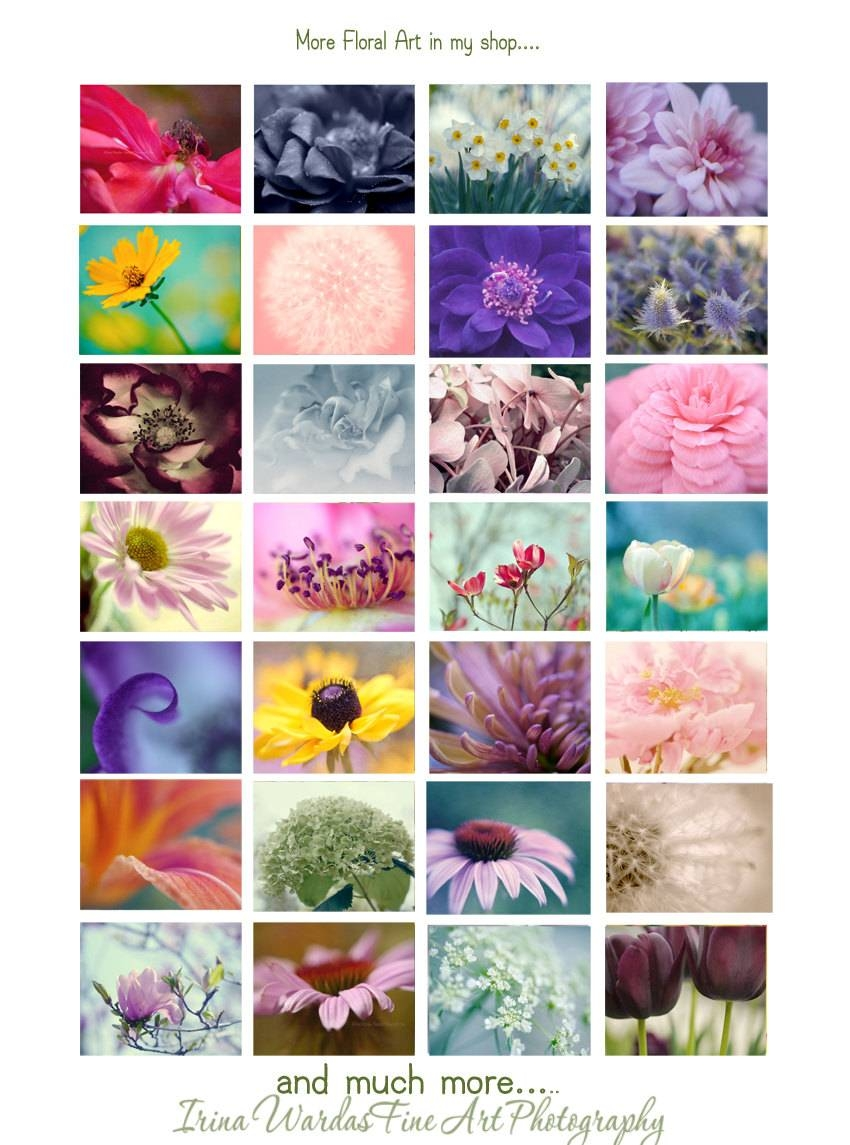 Dahlia Wall Art | Pink Flower | Floral Artwork | Bedroom Wall Art With Regard To Most Recently Released Pink Flower Wall Art (View 9 of 20)