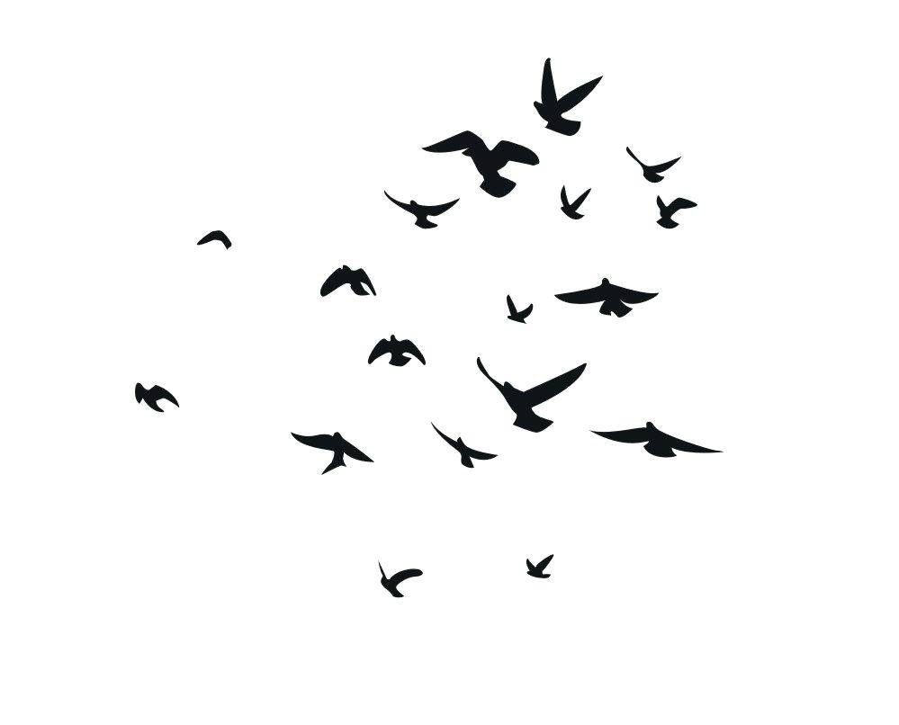 Flock Of Birds Wall Decal Wall Ideas Birds Wall Art Loading Birds Within Recent Flock Of Birds Wall Art (View 19 of 25)