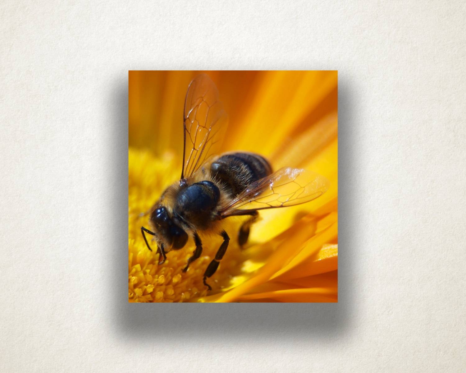 Flower And Bee Canvas Art, Bee Close Up Wall Art, Insect Canvas Throughout Most Recently Released Insect Wall Art (View 9 of 30)