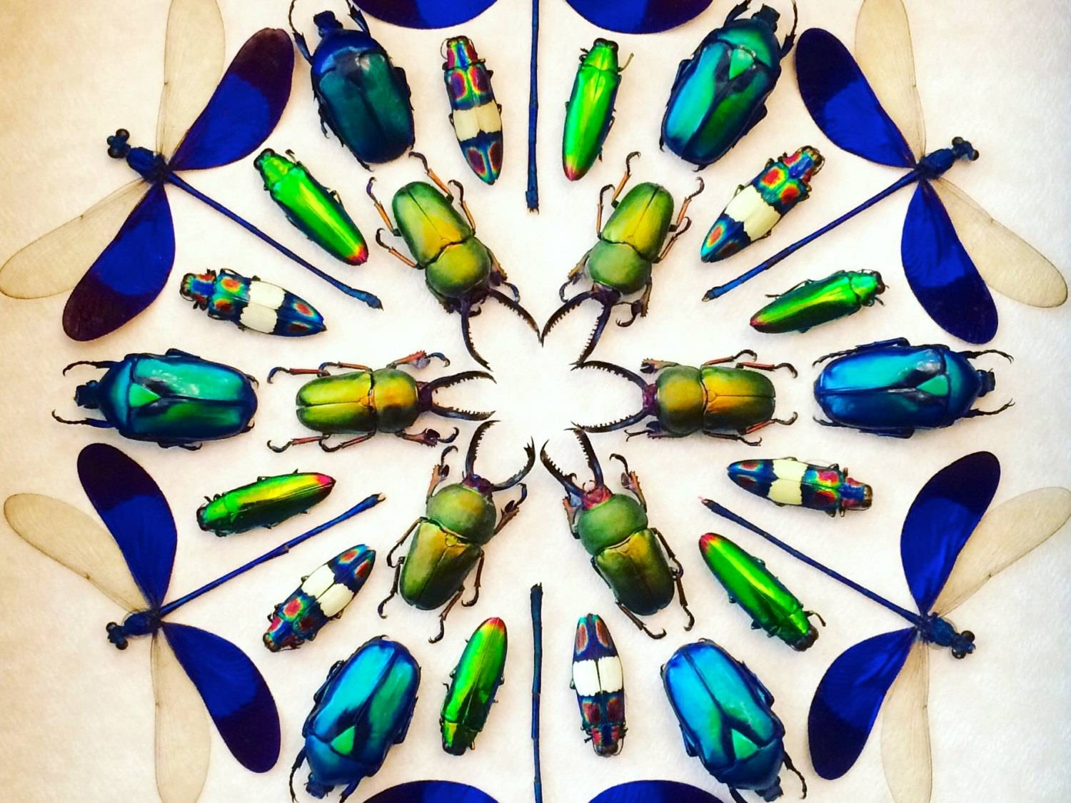 Framed Insect Display Kaleidoscope Real Bugs Framed Beetle Art In Newest Kaleidoscope Wall Art (View 4 of 20)