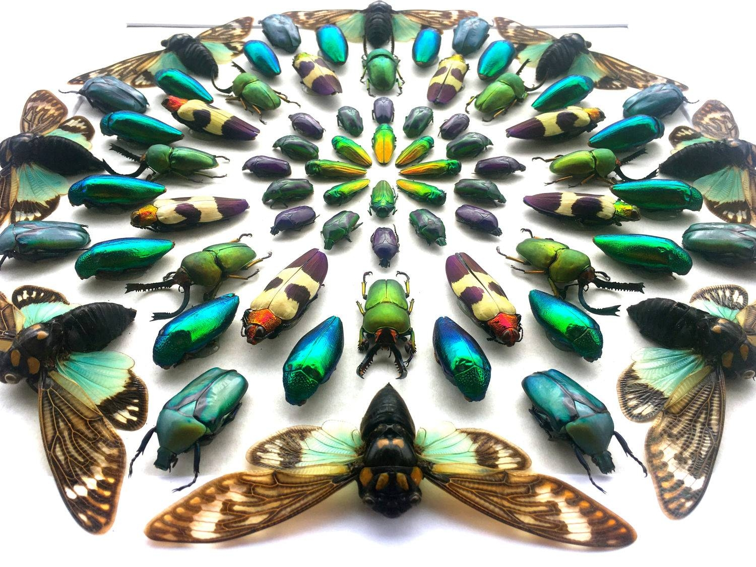 Framed Insect Display Kaleidoscope Real Bugs Framed Beetle Art With 2018 Kaleidoscope Wall Art (View 9 of 20)