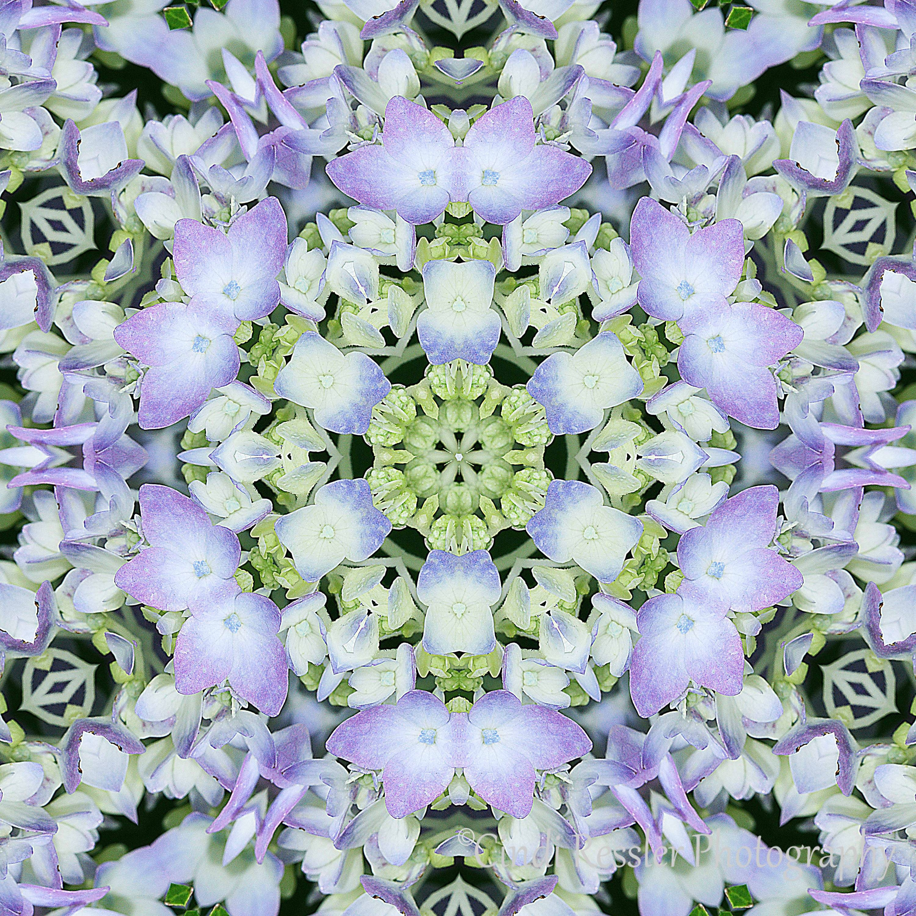 Hydrangea Kaleidoscope, Photo Art, Digital Art, Photography Inside Most Up To Date Kaleidoscope Wall Art (View 10 of 20)