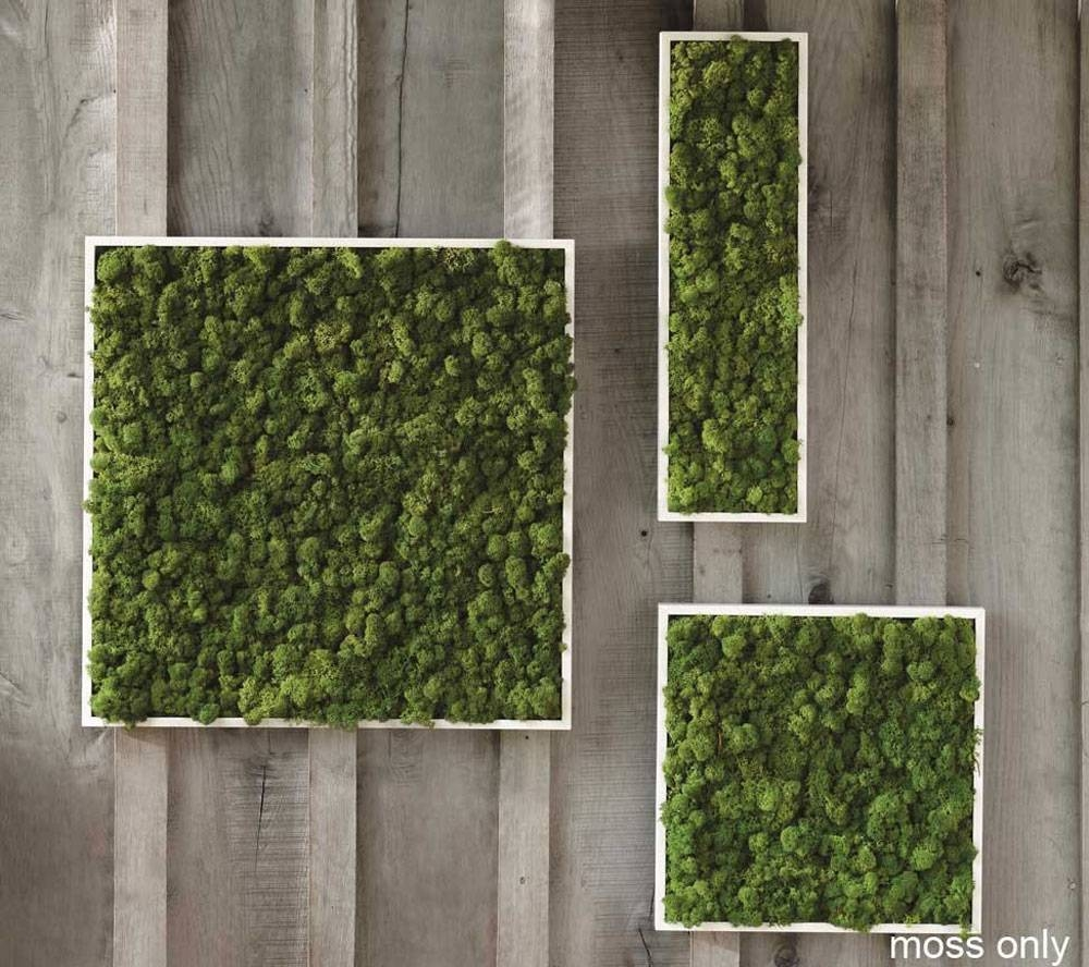 Living Room ~ Fern Moss Wall Art 2 Living Wall Planter Diy Regarding Newest Diy Garden Wall Art (View 20 of 25)
