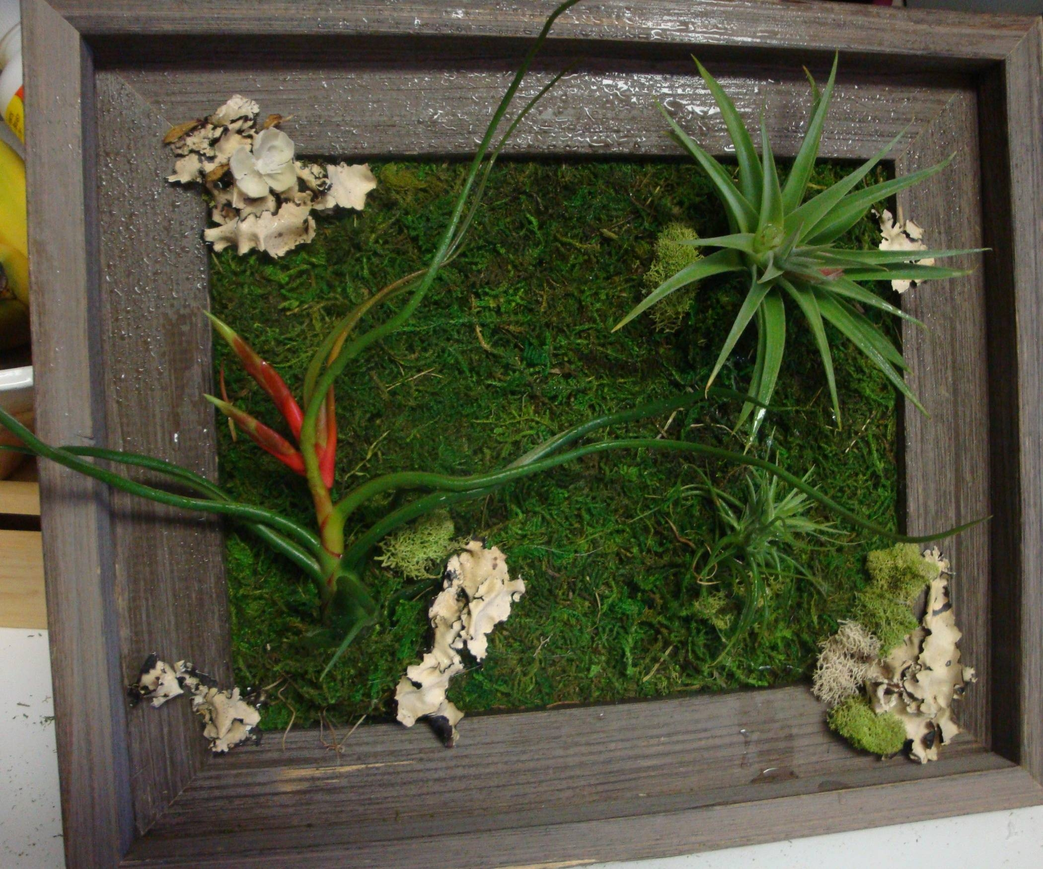 Living Wall Art: 3 Steps (With Pictures) In Recent Floral & Plant Wall Art (View 17 of 25)