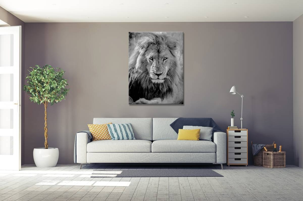 Lord Of The Lions – Rogue Aurora Photography Pertaining To Recent Lion Wall Art (View 7 of 20)