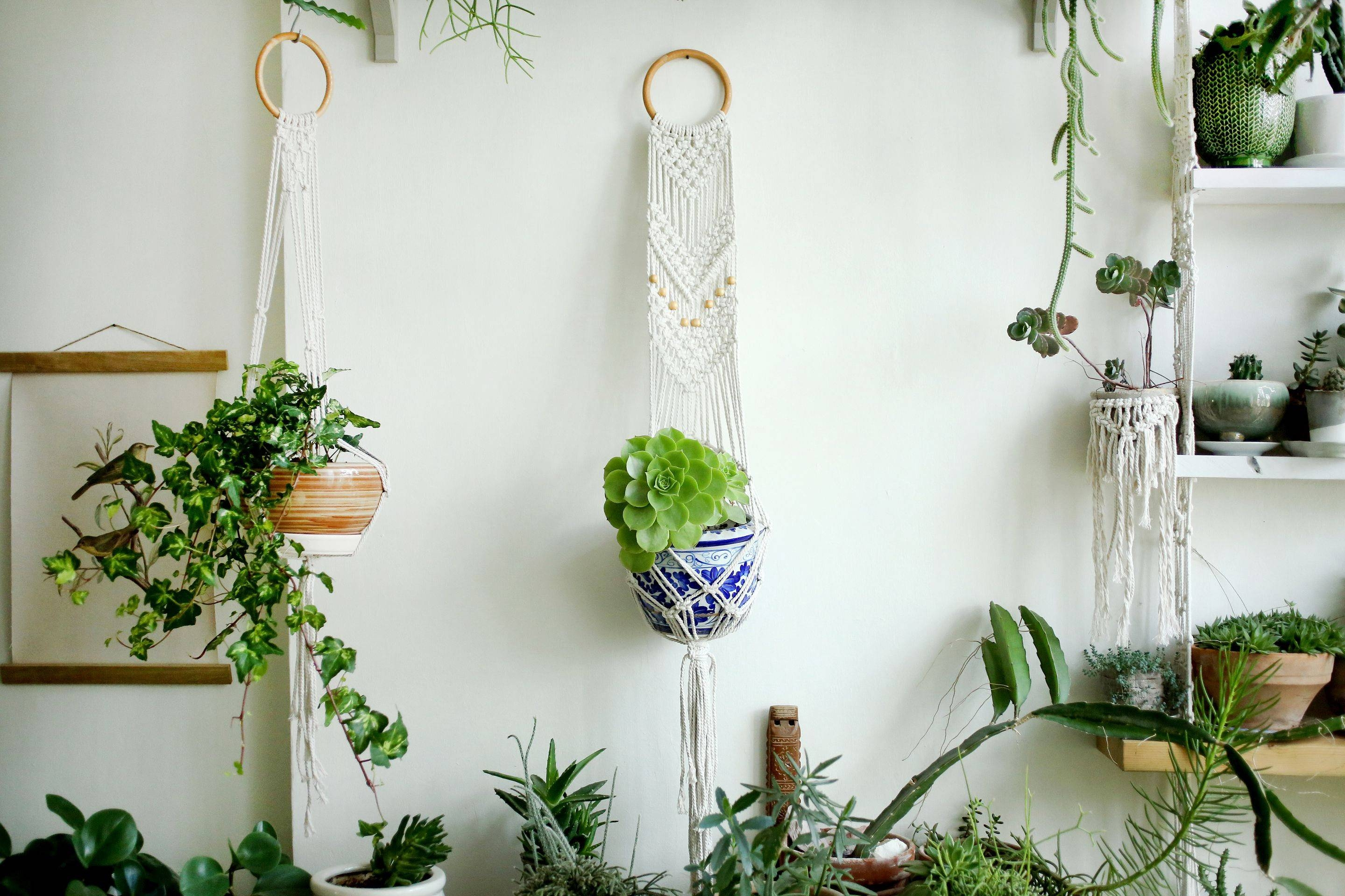 Macrame Plant Holder Hanging Planter Macrame Plant Hange In Current Floral & Plant Wall Art (View 19 of 25)