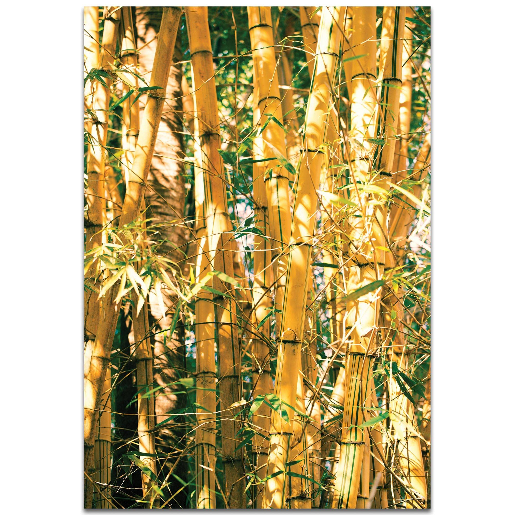 Metal Art Studio – Bamboo Goldmeirav Levy – Nature Photography Intended For Most Recently Released Bamboo Metal Wall Art (View 5 of 25)
