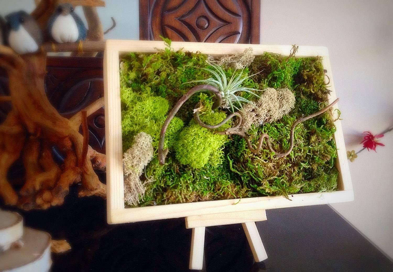Moss Art Wall/ Hanging Garden/ Vertical Garden/ Living Wall/ With Newest Floral & Plant Wall Art (View 20 of 25)
