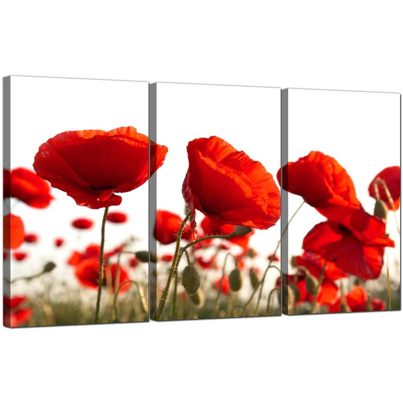 Poppy Canvas Wall Art Set Of 3 For Your Living Room Intended For Most Up To Date Red Poppy Canvas Wall Art (Gallery 3 of 20)