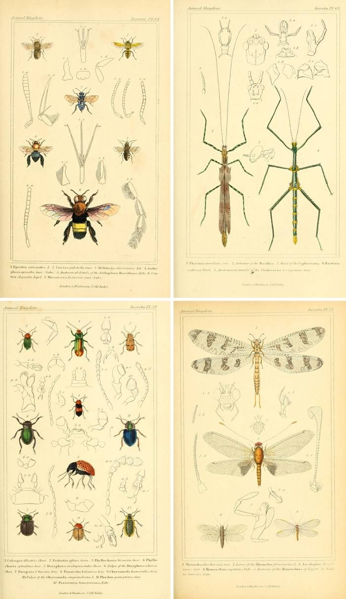 Remodelaholic | 25+ Free Incredible Insects Vintage Printable Images Within Recent Insect Wall Art (Gallery 24 of 30)