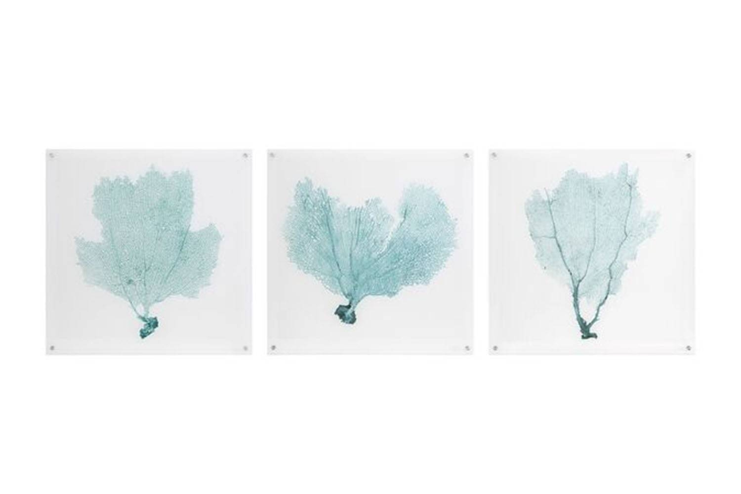 Sea Fan Acrylic Floating Wall Art | Mor Furniture For Less Within Most Up To Date Sea Fan Wall Art (View 11 of 25)