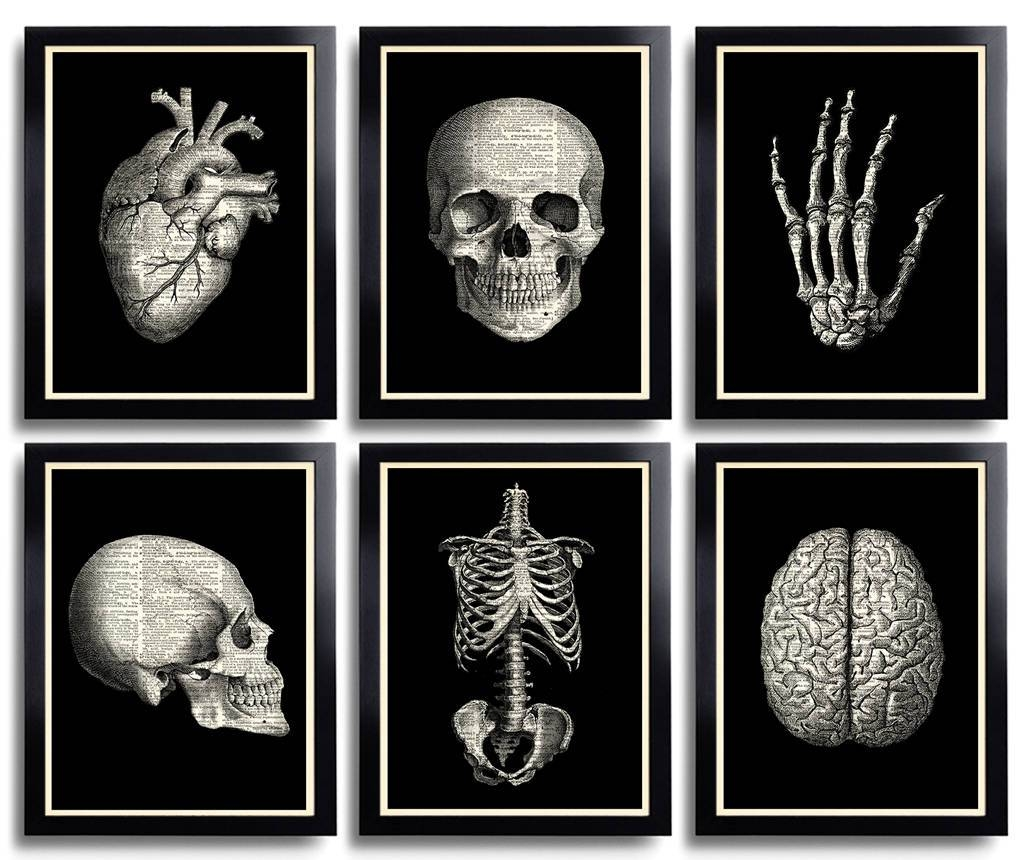 Skull Print Anatomical Poster Set Anatomy Print Set Of 6 With 2017 Medical Wall Art (View 15 of 20)