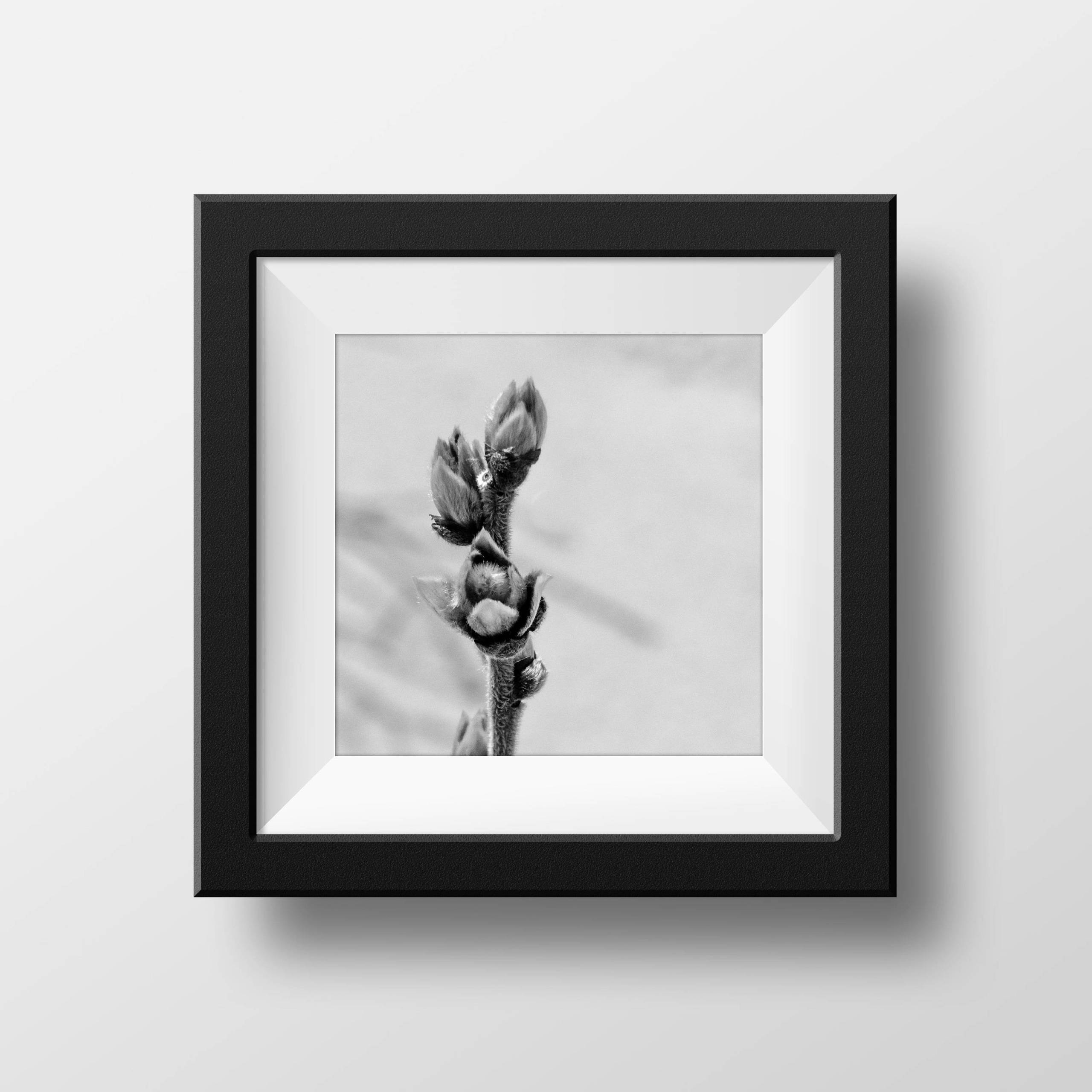 Square Garden Bud Metal Wall Art Print, Black And White Botanical Within Most Up To Date Botanical Metal Wall Art (View 12 of 25)