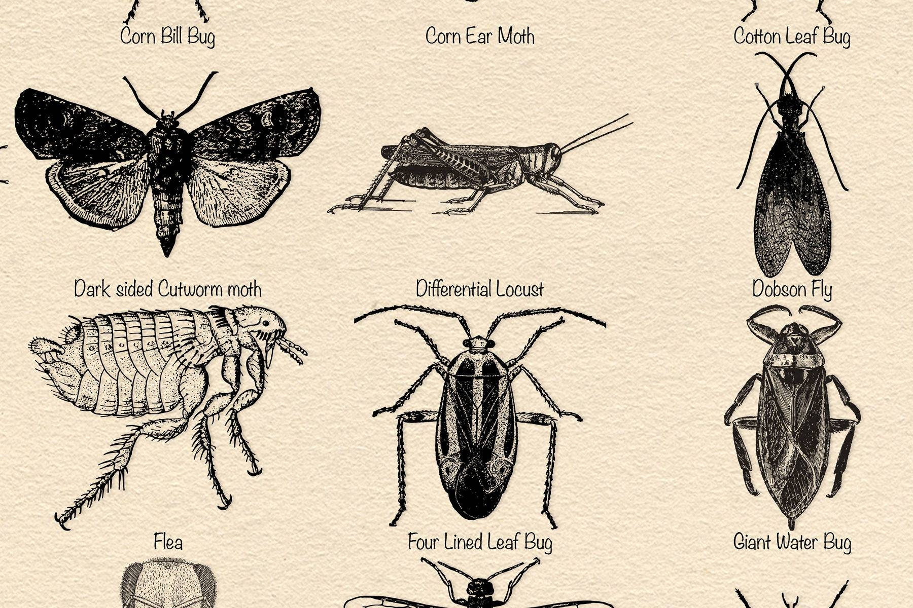 Vintage Insects Poster Many Colours Classroom Poster Butterfly Bugs Dragonfly Ladybird Modern Wall Art Line Art Print Insect Illustration 591F273A3 Throughout Current Insect Wall Art (View 27 of 30)