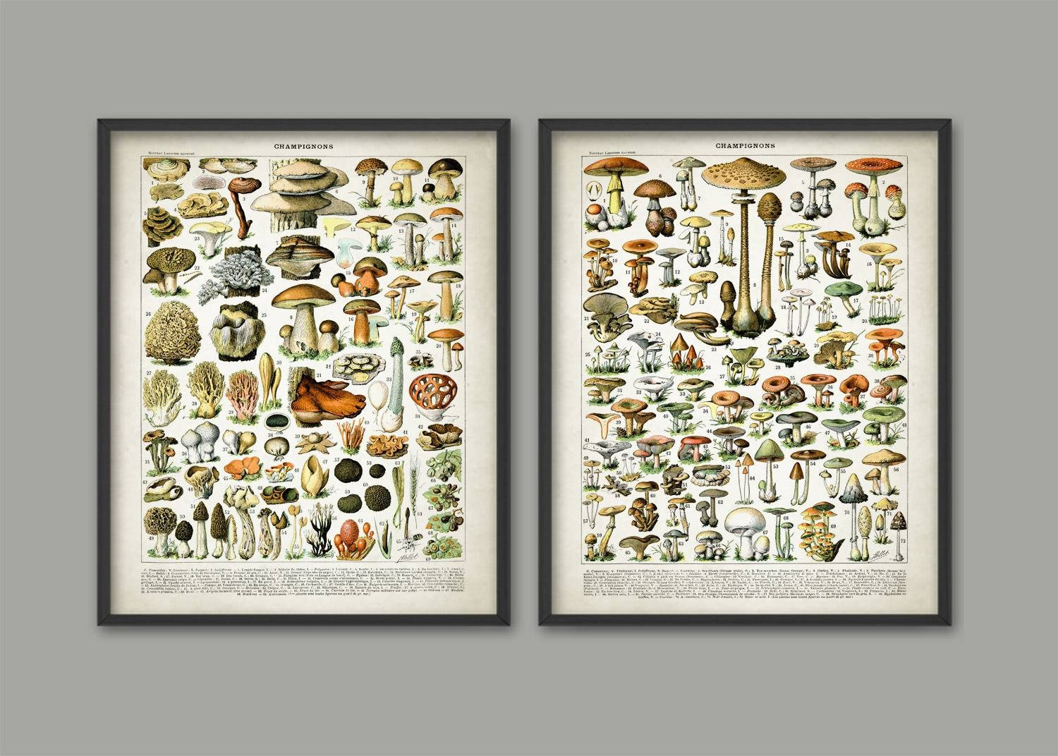Vintage Mushroom Art Print Set Of 2 Mushroom Kitchen Decor In Most Popular Mushroom Wall Art (View 7 of 20)