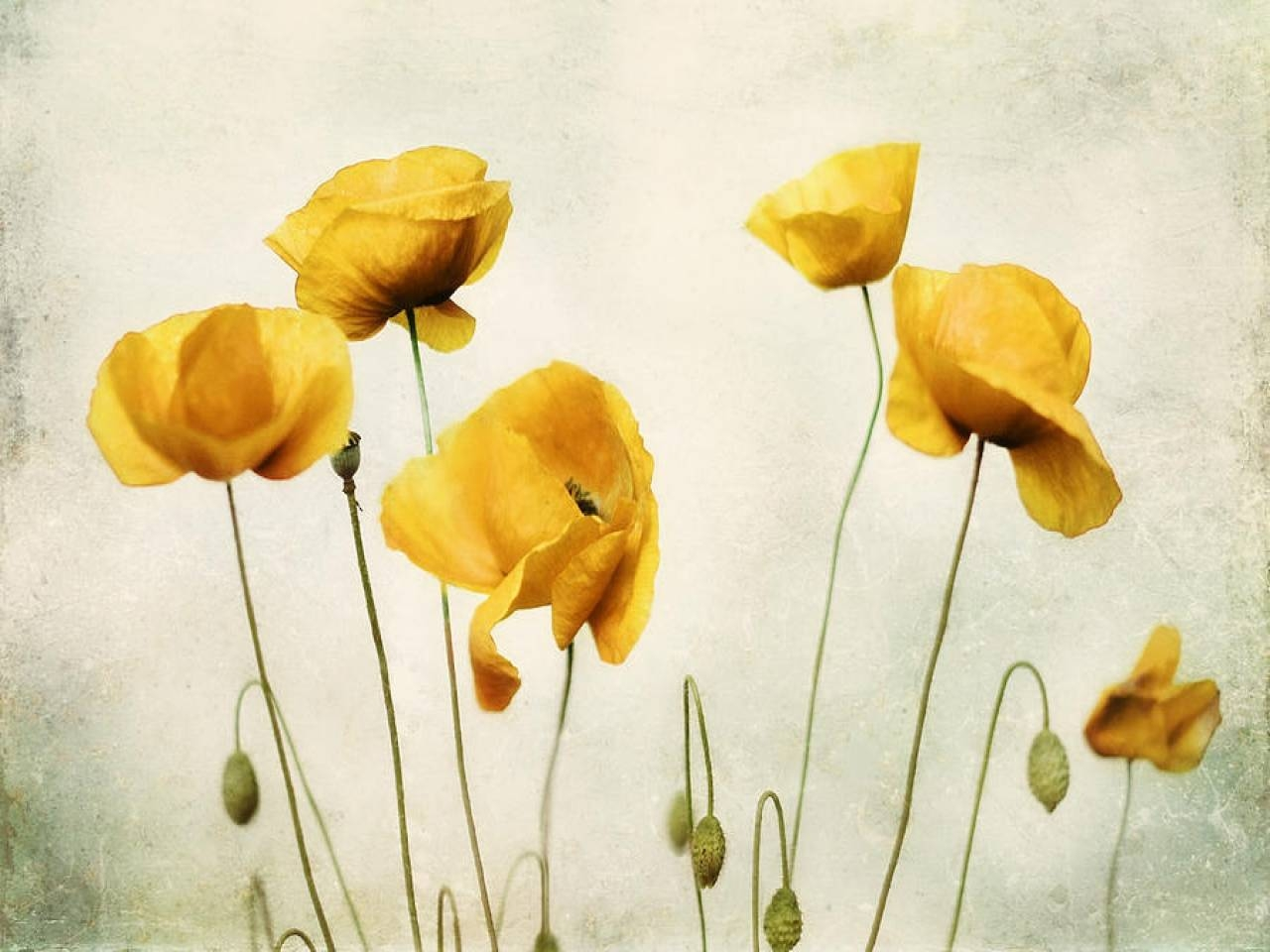 Wall Art Designs: Poppy Wall Art Yellow Poppy Yellow Poppies Wall Throughout 2017 Metal Poppy Wall Art (View 16 of 30)