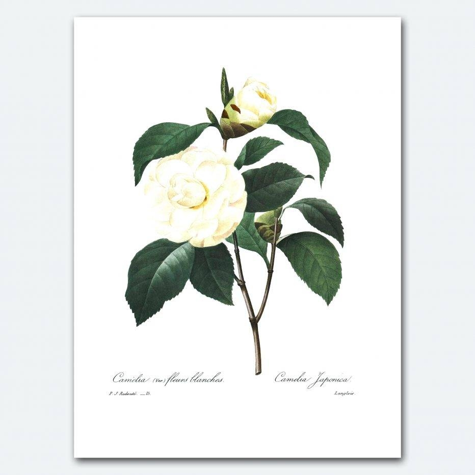 Wall Decor : 134 Botanical Metal Wall Decor Cozy Camellia Art Intended For Best And Newest Botanical Metal Wall Art (View 4 of 25)