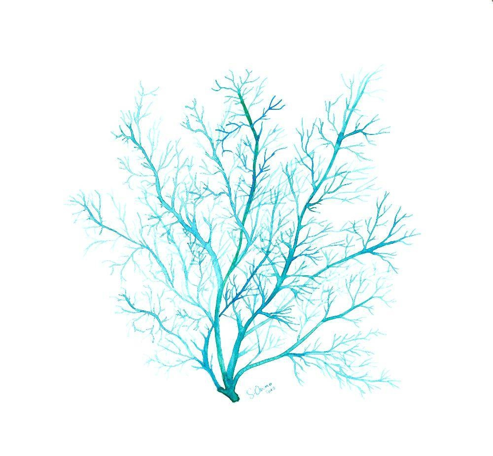 Wall Decor : Sea Fan Wall Decor 68 Bright Turquoise Blue Coral Inside Most Up To Date Sea Fan Wall Art (View 16 of 25)