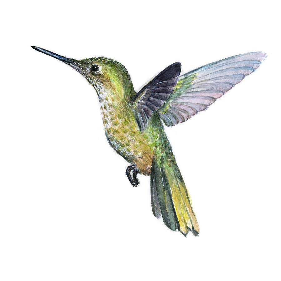 Hummingbird Watercolor Illustration Paintingolga Shvartsur Inside Most Recent Hummingbird Metal Wall Art (View 7 of 20)