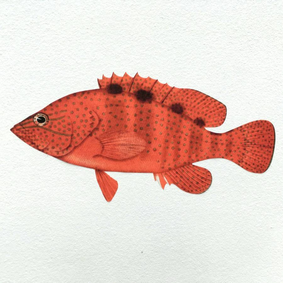 Wall Arts ~ Charming Trendy Wall Filename S Ljpg Metal Wall Art In Newest Tropical Fish Metal Wall Art (View 9 of 20)