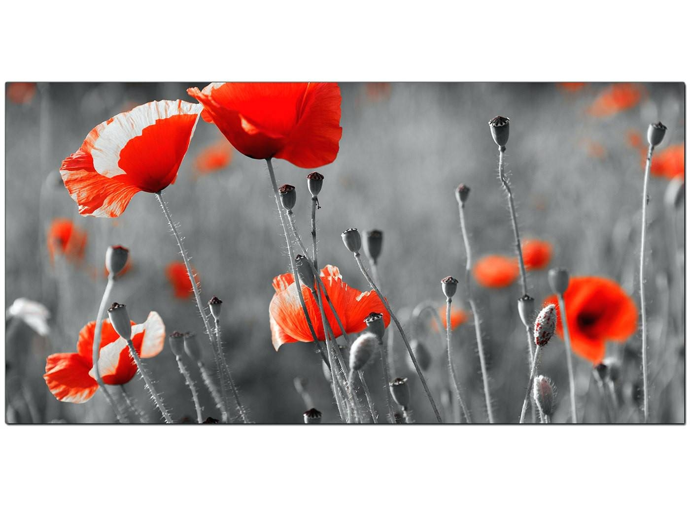 Wall Arts ~ Overall Size 120cm X 50cm Poppy Metal Wall Art Uk Throughout Most Recently Released Poppy Metal Wall Art (View 8 of 20)