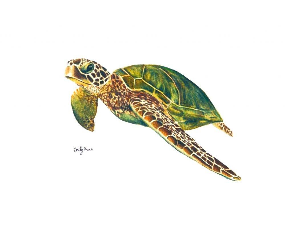 Wall Arts ~ Zoom Cozy Zoom 58 Tropical Ocean Sea Turtle Metal Wall Intended For Most Popular Sea Turtle Metal Wall Art (View 20 of 20)