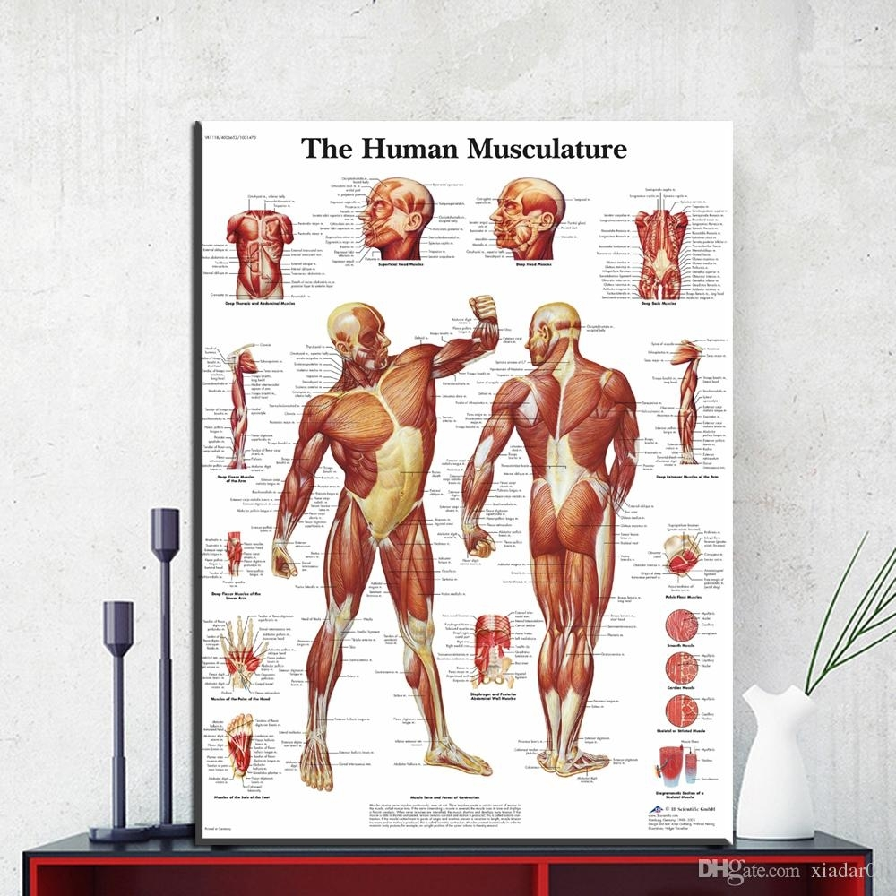 Zz1854 Human Body Anatomy Canvas Art Print Painting Poster Wall Intended For Most Popular Abstract Body Wall Art (Gallery 15 of 20)