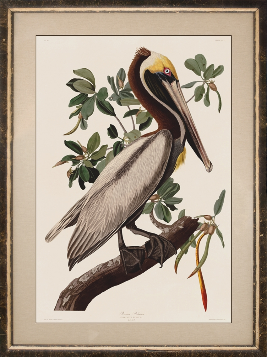 Birds Framed : Nostalgia Fine Art – Antique Prints – Giclee Prints With Recent Birds Framed Art Prints (View 7 of 15)