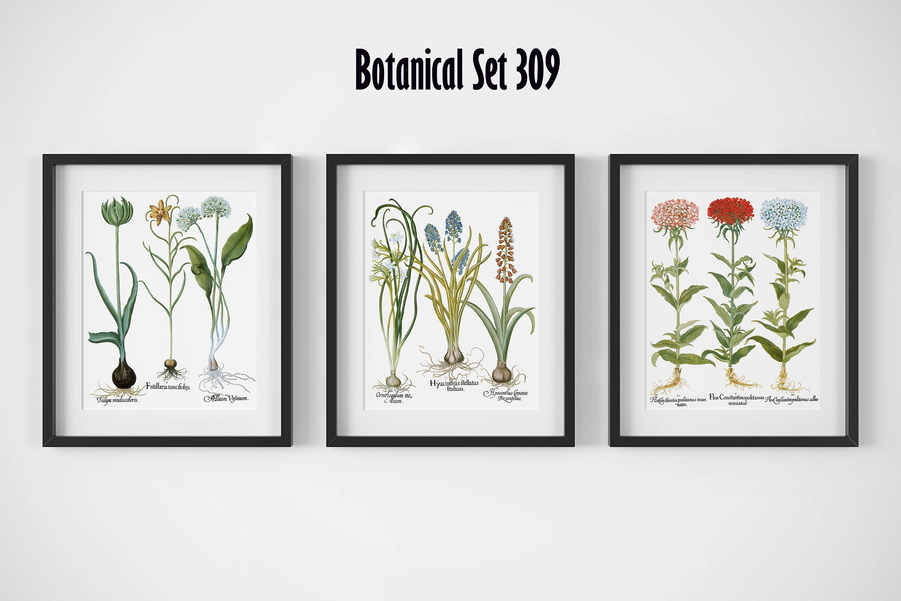 Botanical Print Set Of 3, Framed Botanical Art, Vintage Floral With Regard To 2017 Framed Botanical Art Prints (View 5 of 15)