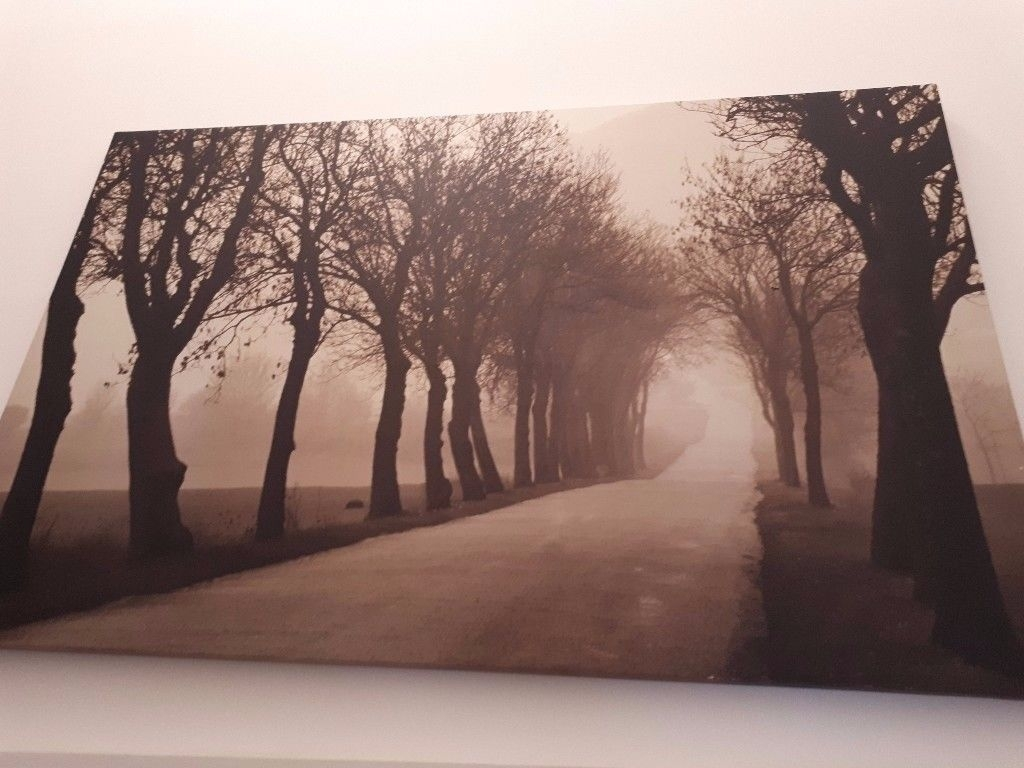 Canvas Wall Art Forest In Sepia Big Size | In Grangetown, Cardiff Inside Best And Newest Gumtree Canvas Wall Art (View 2 of 15)