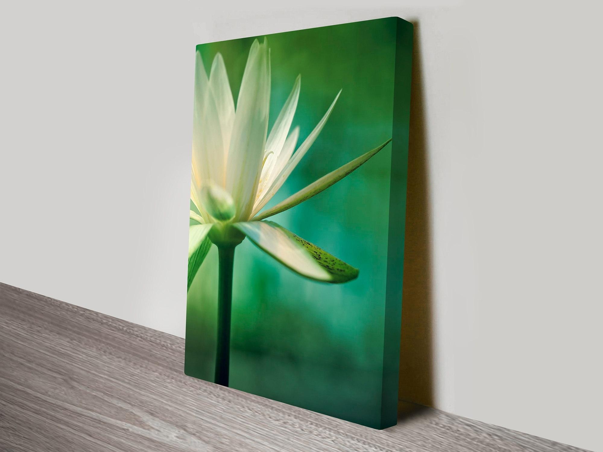 Flower Artwork On Canvas Prints Australia Intended For 2017 Canvas Wall Art In Australia (Gallery 3 of 15)