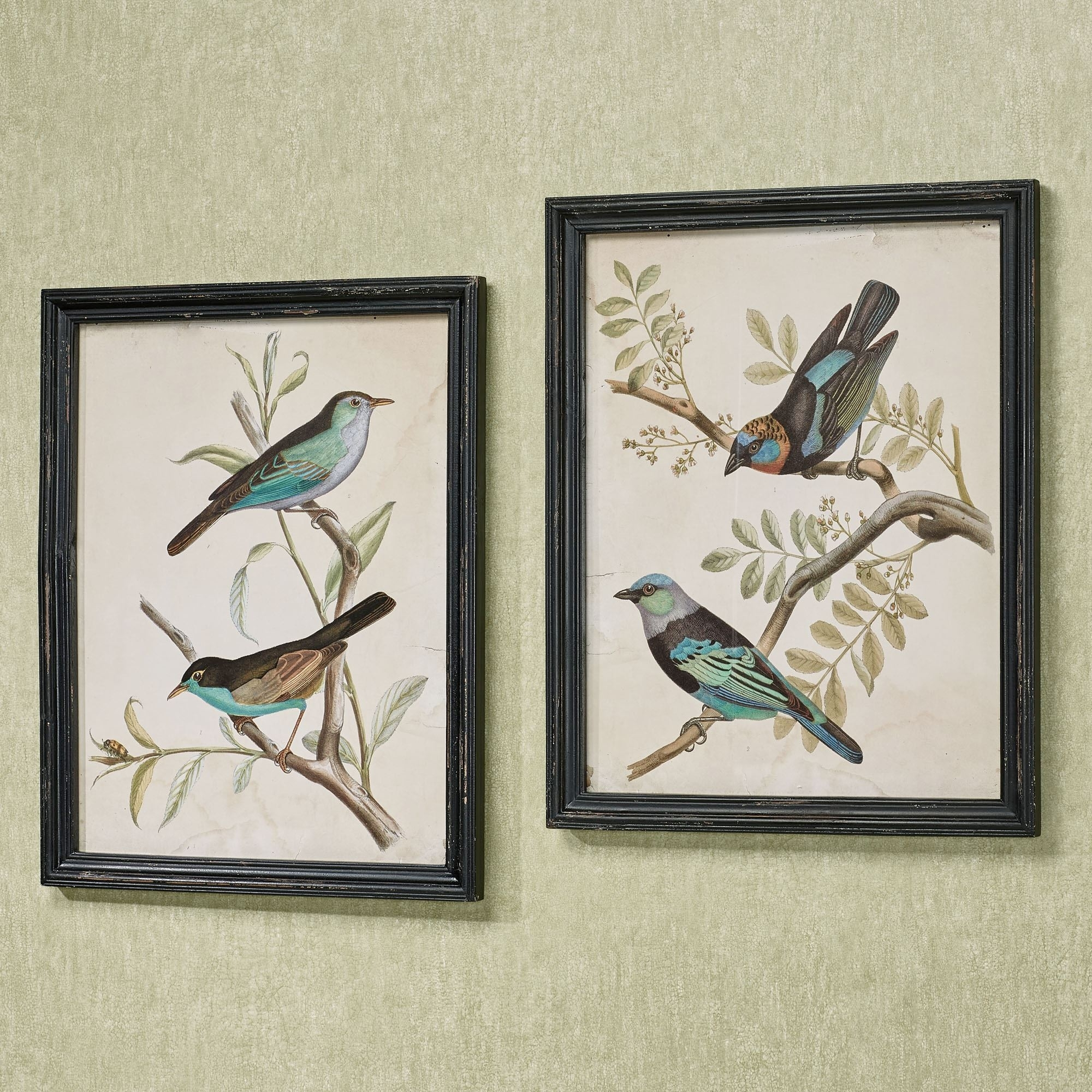 Framed Art Prints | Touch Of Class Pertaining To Most Recently Released Birds Framed Art Prints (View 2 of 15)