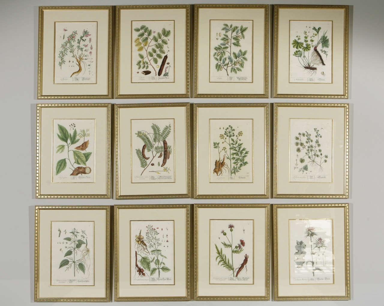 Framed Botanical Prints Sets | Sorrentos Bistro Home Throughout Most Popular Framed Art Prints Sets (View 7 of 15)