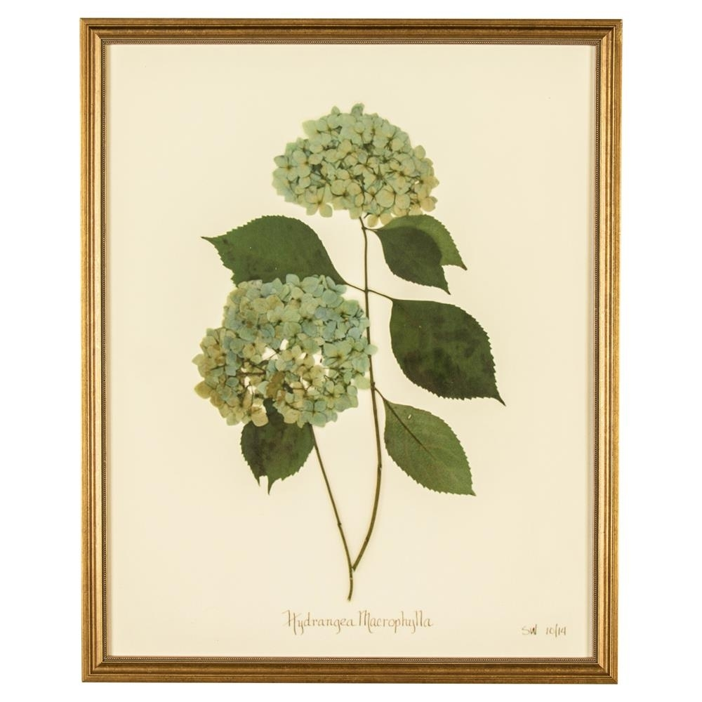 French Hydrangea Macrophylla Print Botanical Framed Wall Art – Ii Regarding Most Recently Released Framed Botanical Art Prints (View 9 of 15)