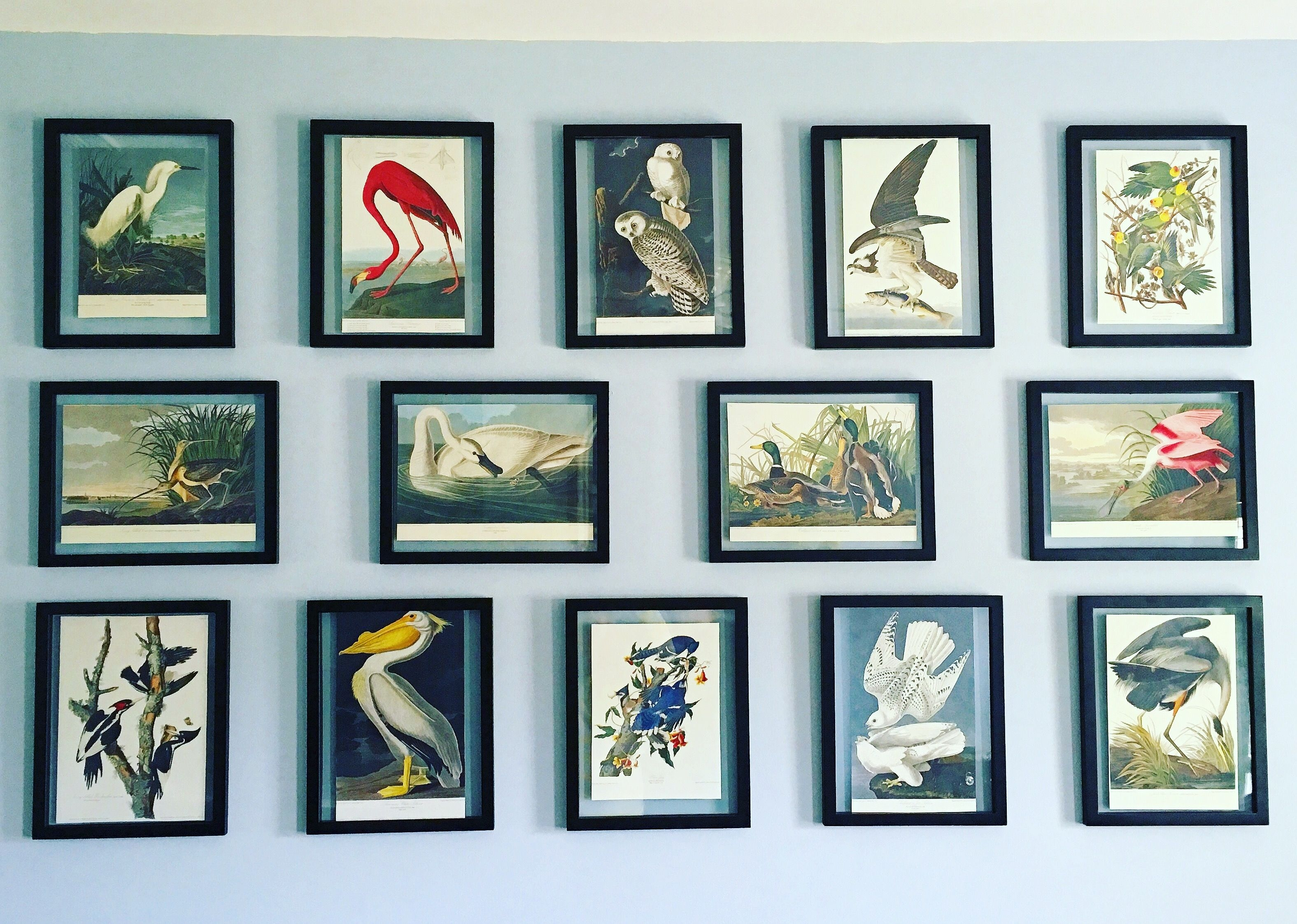 Gallery wall framed audubon bird prints dream decorating with regard to most recently released