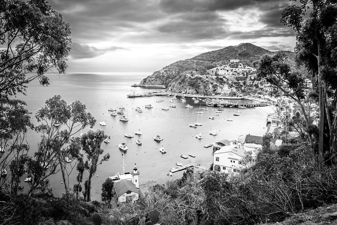 Image: Catalina Island California Black And White Photography With Regard To Most Up To Date Black And White Photography Canvas Wall Art (Gallery 11 of 15)