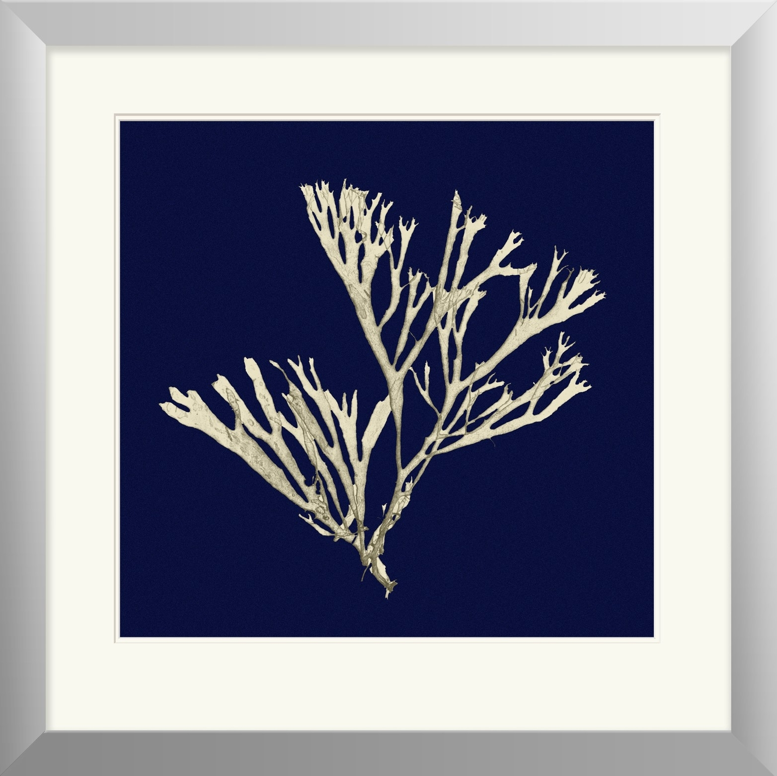 Indigo And White Coral Framed Print Ii | Beach House Style In Newest Framed Coral Art Prints (View 11 of 15)