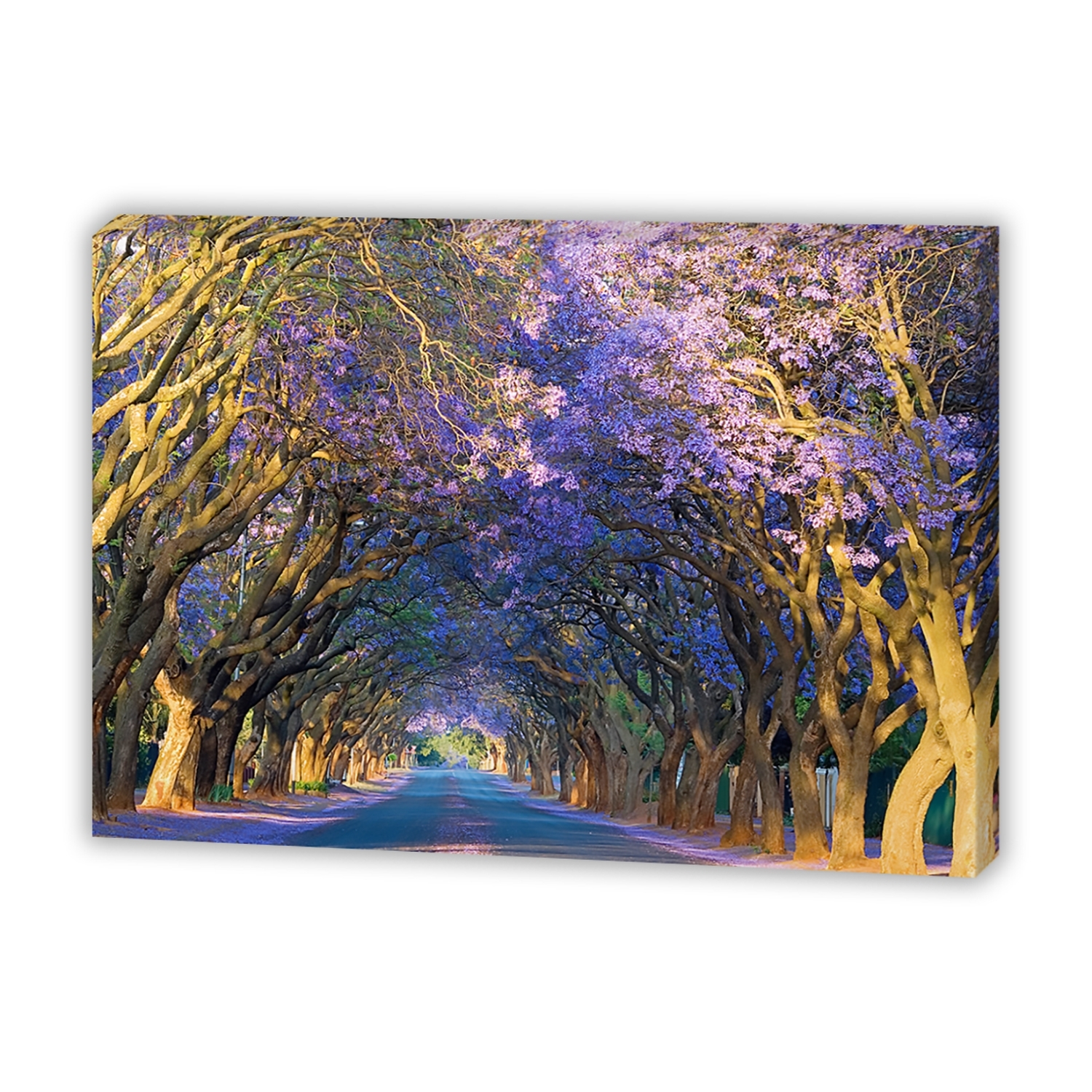 Jacaranda Alley – Canvas Print – Wall Art – Australia Intended For Most Popular Canvas Wall Art Of Perth (Gallery 15 of 15)