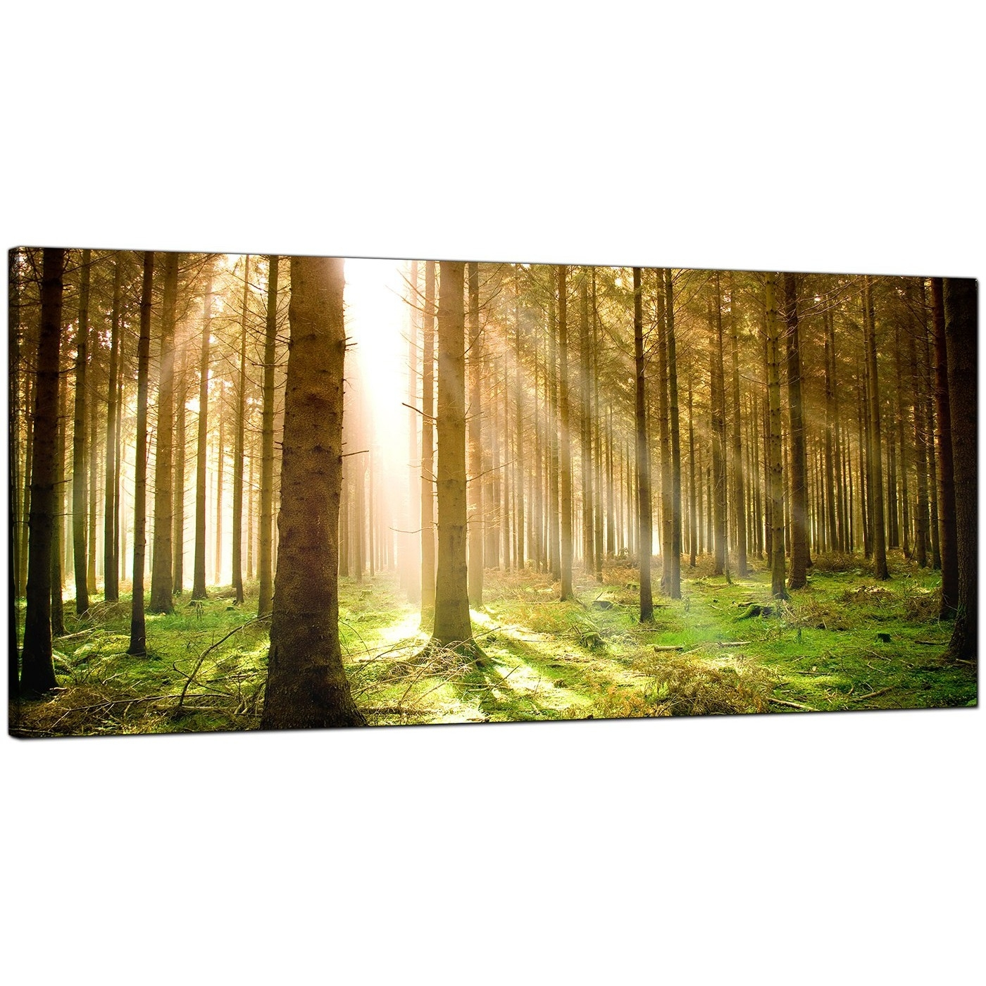 Modern Canvas Prints Of Forest Trees For Your Dining Room In Recent Canvas Wall Art Of Trees (View 7 of 15)