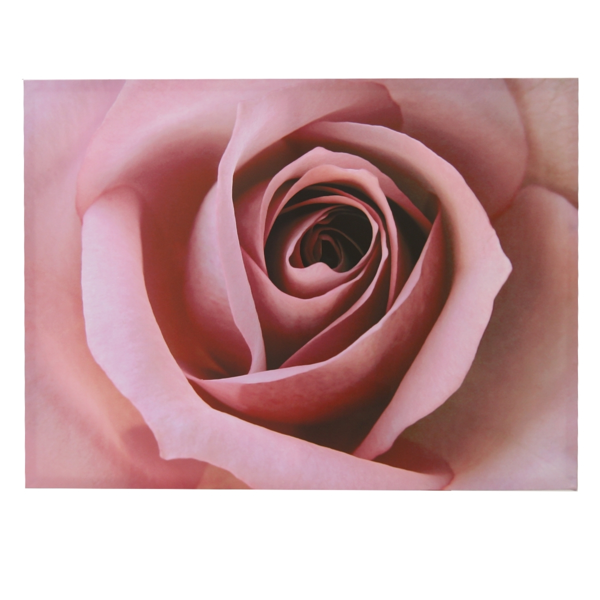 Pink Rose Canvas Wall Art | Harry Corry Limited inside 2018 Roses Canvas Wall Art