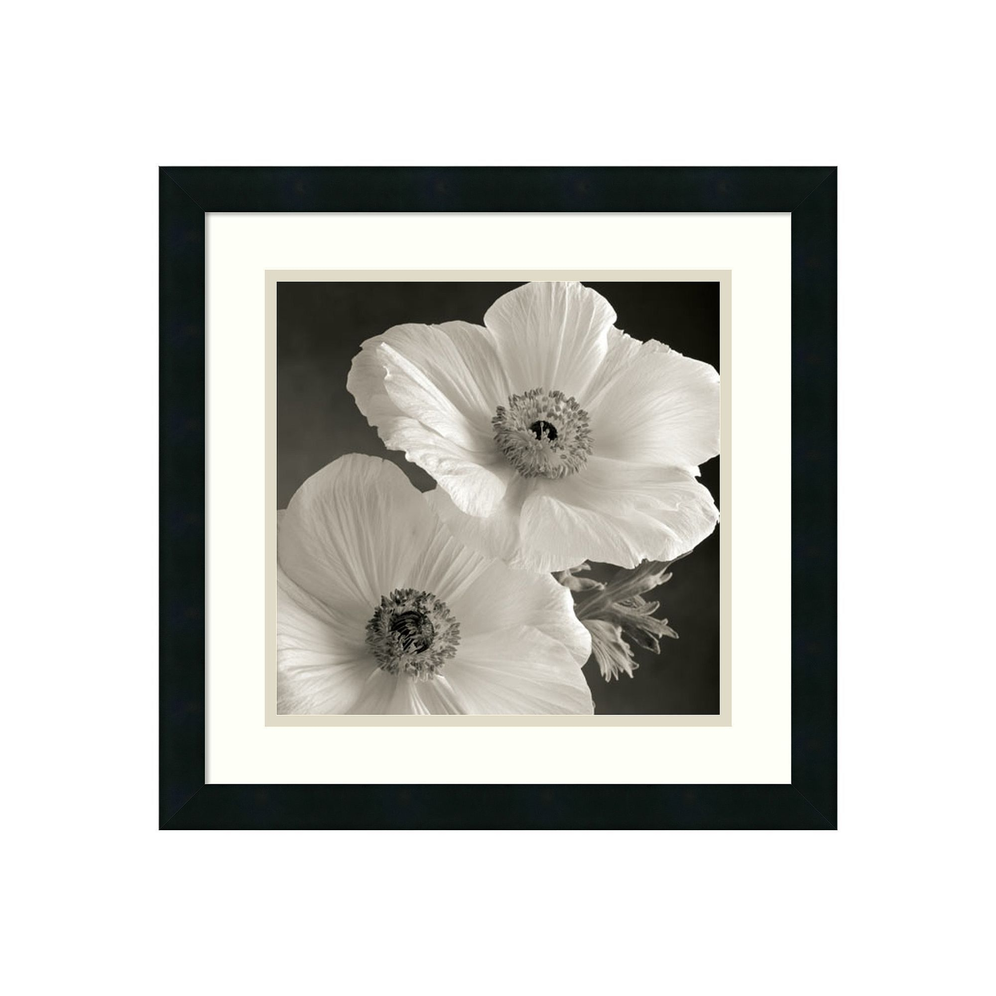 Poppy Study I'' Floral Framed Wall Art, Black | Floral, Walls And For Current Black Framed Art Prints (View 12 of 15)